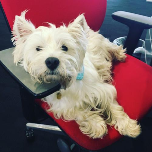Bring Your Dog To Work Monster Co Uk