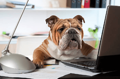 Dog office day | Professioni pet-friendly